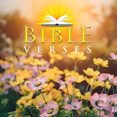Genesis 16:8